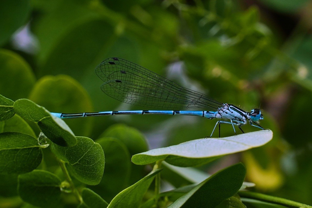 dragonfly, insect, rainy day